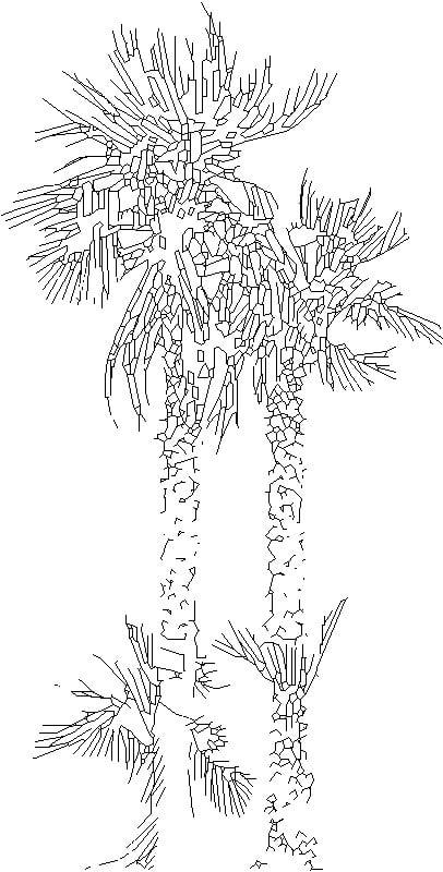 planta01