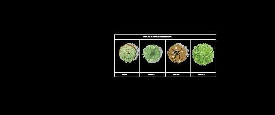 Arboles En Planta
