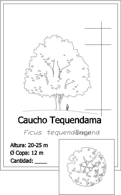 escala de árbol ficus