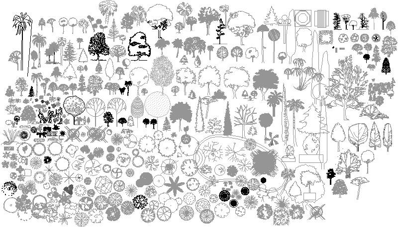 Arborizacion