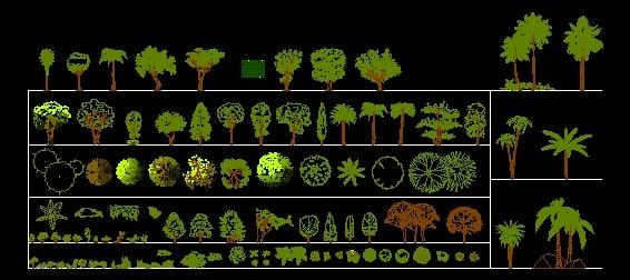 Arboles Plants