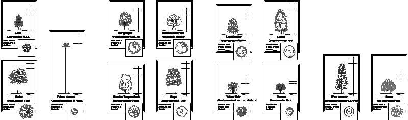 Bloques de 13 árboles en planta y alzado